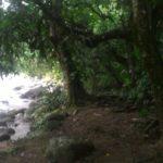 Camping Floresta Cultural