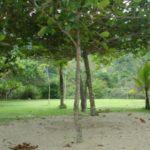 Camping Marimbar