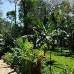 Orityba Eco-Camping
