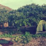 Roots Beach Camp e Hostel Atins
